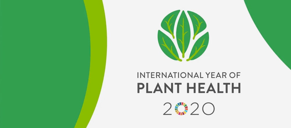 The International Year of Plant Health