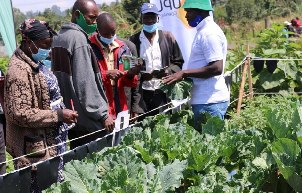 Farmers and county officials being shown various crops during the KEPHIS Kitale regional office farmers field day